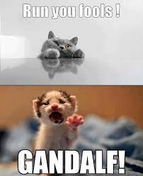 gandalfcat