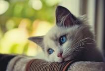 sadcat2